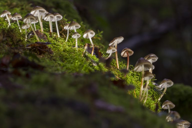 Know Everything About Magic Mushrooms